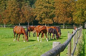 Tour de Flur - Pferdezucht